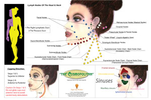 chinese negative pressure facial cupping poster